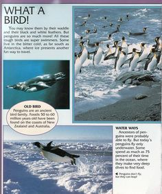 Penguin Facts | Penguin Place Penguin Facts, Ways To Travel, Antarctica, Penguins, Black And White, Places, Fun, Movie Posters, Nature