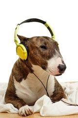 Hund entspannt mit Musik