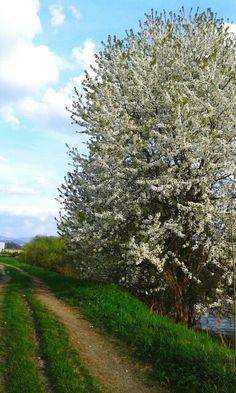 Spring is heree:)