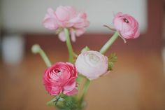 we must grow beds and beds of ranunculus!