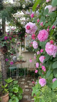 Dream Garden, Garden Art, Cottage Garden Patio, Small Cottage Garden Ideas, Back Gardens, Outdoor Gardens, Beautiful Gardens, Beautiful Flowers, Garden Planning