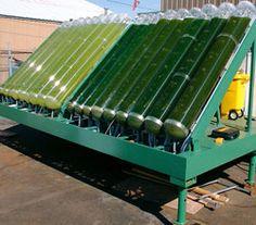alge biodiesel solar panels
