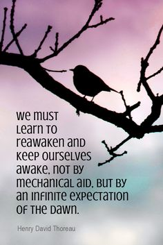 Daily Quotation for March 17, 2015  #quote  #quoteoftheday    We must learn to reawaken and keep ourselves awake, not by mechanical aid, but by an infinite expectation of the dawn. - Henry David Thoreau