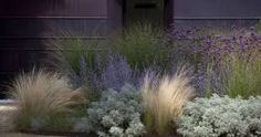 Image result for grey grasses with verbena