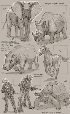Feng Zhu Design: Animal Contour Demo