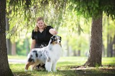 Alexis Weber and her AKC champion Australian Shepherd, Gideon, will be making a VIP (Very Important Pup) trip to New York in February. Australian Shepherd Puppies, Australian Shepherds, New York February, Dog Show, New York Travel, Westminster, Vip, Champion, Animals