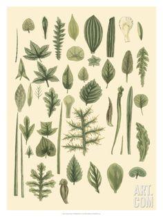 Abundant Foliage I Giclee Print by John Miller (Johann Sebastien Mueller) at Art.com
