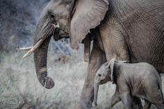 Quien dijo que los elefantes no saben bailar, se nota que no han leído la…