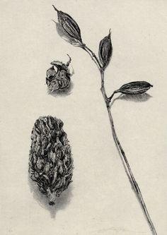 hangalittle: No20 齋藤悠紀 SAITO Yuki ED/60 「三様」 銅版/雁皮刷り 21×29.7cm