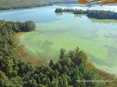 Dickson Lake Algae Bloom - September 26, 2014