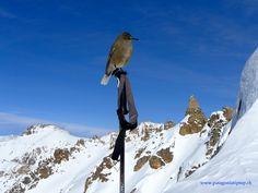 Skitour to the Refugio Frey area in Bariloche, Argentina. Ski Touring, Volcano, Alps, Mount Everest, Skiing, Tours, Mountains, Places, Travel
