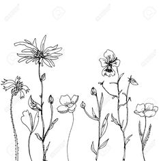 floral composition with ink drawing daisy flowers, doodle wild plants, monochrome black line drawing floral card, hand drawn vector illustration: Royalty-free vector graphics Botanical Drawings, Drawings, Nature Drawing, Daisy Flower Drawing, Ink Drawing, Art, Daisy Drawing, Flower Line Drawings, Botanical Line Drawing