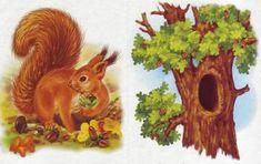 kak-zhivete - запись пользователя развитие детей (pr567895) в сообществе Развитие и обучение детей от трех до шести лет в категории Развивающие игры - Babyblog.ru Animals For Kids, Animals And Pets, Worksheets For Kids, Forest Animals, Animal House, Infant Activities, Habitats, Squirrel, Montessori