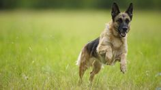 Scientists working on the largest study of ticks in dogs have found that almost…
