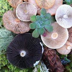 mushrooms         #fungi         #lichen         #moss