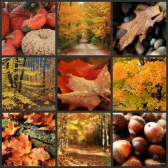 Autumn Collage I by forestlady, via Flickr