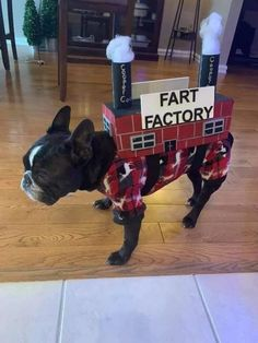 Read 10 French Bulldog Facts That You May Find Fascinating Cute Funny Animals, Funny Dogs, Boston Terrier Love, Boston Terriers, Boston Terrier Costume, Puppy Teething, Pet Costumes, Fart Costume, Dog Memes