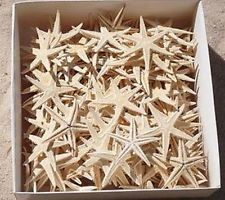 BULK Lot 250 x Real Starfish 2-3cm - perfect size for beach wedding invitations