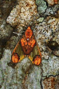 Image detail for -Moth Resting on Tree Bark