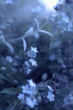 ♡ Blue Flowers ♡ flowers night Blue wildflowers in bloom Light Blue Aesthetic, Blue Aesthetic Pastel, Rainbow Aesthetic, Aesthetic Colors, Flower Aesthetic, Aesthetic Photo, Blue Flower Wallpaper, Navy Wallpaper, Blue Wallpapers