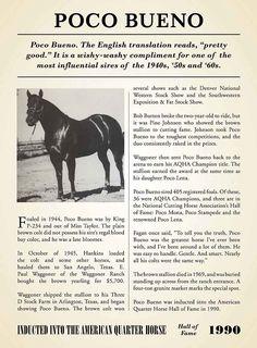 Poco Bueno Quarter Horse   Poco Bueno AQHA Hall of Fame