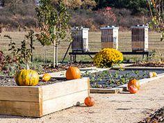 Ferdinandovy zahrady: Zabydlená zahrada — Česká televize Pumpkin, Vegetables, Outdoor, Outdoors, Buttercup Squash, Pumpkins, Vegetable Recipes, Outdoor Games, Squash