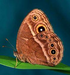http://news.nationalgeographic.com/news/2015/03/150307-butterflies-caterpillars-colors-predators-prey-animals-science/
