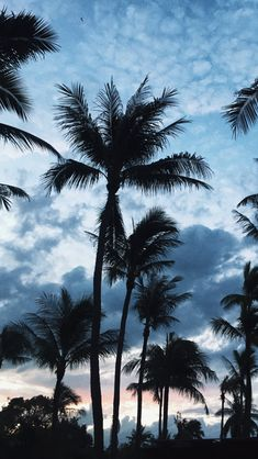 Ocean Wallpaper, Summer Wallpaper, Tree Wallpaper, Iphone Background Wallpaper, Scenery Wallpaper, Landscape Wallpaper, Aesthetic Pastel Wallpaper, Nature Wallpaper, Aesthetic Wallpapers