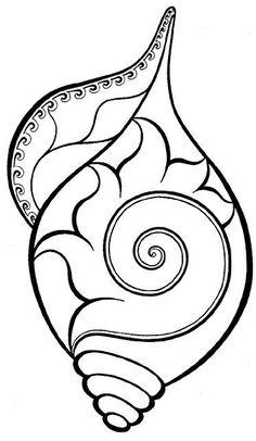 a conche shell