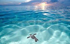 swim swim swim my-randomness