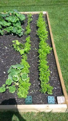 Les concombres du jardin de Patricia Ainsi, Plants, Gardens, Ranch Dip, Veggie Tray, Farmer, Cucumber, Backyard Farming, Group