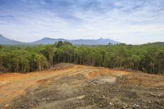 L'HOMME LE PLUS GRAND PREDATEUR DE LA PLANETE ! La déforestation de la forêt tropicale malaisienne. La Norvège devient le premier pays à interdire l'importation de produits issus de la forêt tropicale