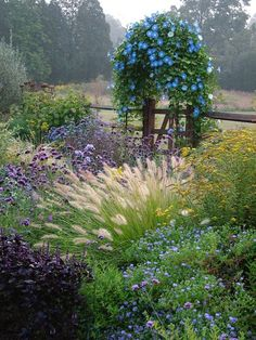 destinationpearlstreet:  (via Daily Garden: Purple and Blue Prairie —studio 'g' garden design and landscape inspiration and ideas Studio G, Garden Design & Landscape Inspiration)