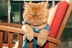 Welcome to the new pet star on Yummypets.com ... GARFI ... #cute #cat #angry #pet #animal #kitty #kutten #meow #awsome #amazing #ginger