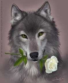 wolf with white rose