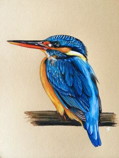 Kingfisher bird done in prismacolor pencils. By Shannon Kingfisher bird done in prismacolor pencilsY. Art Drawings For Kids, Horse Drawings, Pencil Art Drawings, Bird Drawings, Animal Drawings, Drawing Art, Watercolor Animals, Watercolor Paintings, Drawing Techniques Pencil