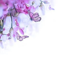 Fototapeta Bukiet z białych i różowych róż, Motyl. kwiatów w tle. 365 dni na zwrot ✓ Miliony wzorów ✓ 100% ekologiczny druk ✓ Profesjonalna obsługa i doradztwo ✓ Skonfiguruj online!