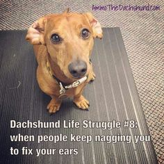 Doxies  Excellent ! We're proud you love it ! Allow us know if you get thoughts anyway , we're glad tosupport : ) Here's my shop ==> https://etsytshirt.com/dachshund #dachshundareawesome