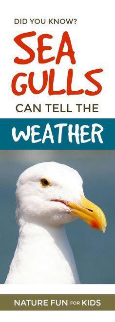 Did you know seagulls can tell the weather  ... #birds #nature