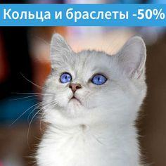 Скидка 50% по промокоду 7f29y5hf Cats, Animals, Gatos, Animaux, Animales, Cat, Kitty, Animal, Dieren