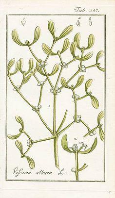 Johannes Zorn, Icones Plantarum Medicinalium 1779