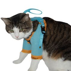 Healthy Kitty Care Harness the number one Cat Grooming Tool!!