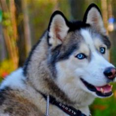 "My ""grand dog"" Walker. Beautiful!"