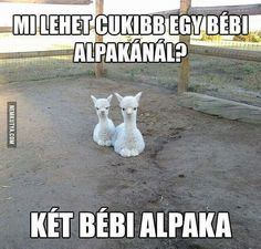 Cute Jokes, Funny Cute, Really Funny, Funny Jokes, Animals And Pets, Funny Animals, Cute Animals, Me Too Meme, Little Pets