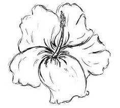 Draw Flower Patterns Hibiscus Flower Drawings Tattoo Design Page 2 Hawaiian Flower Drawing, Hibiscus Flower Drawing, Hibiscus Flower Tattoos, Gladiolus Flower, Floral Drawing, Hawaiian Flowers, Hibiscus Flowers, Hibiscus Bush, Hawaiianisches Tattoo