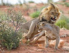 Watch out Photo by Bridgena Barnard -- National Geographic Your Shot