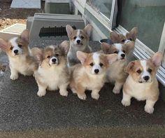 A pack of doggos http://ift.tt/2rQIyDJ