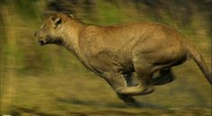 11 Best Tanzania Wildlife Photos Images On Pinterest Cool Places