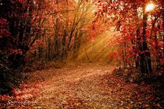 Autumn is a second spring when every leaf is a flower - Albert Camus #autumnlove #leafphotography by Mike Moyer