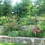 One of my favorites: For this project, we turned a large, relatively sparse garden into a welcoming backyard habitat. Our clients, avid bird lovers, wanted to encourage more species to come and visit. Foundation Planting, Front Steps, Native Plants, Habitats, Garden Landscaping, Stepping Stones, Woodland, Wildlife, Sidewalk